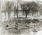 Cedar Logs at Cedar Bayou circa 1899